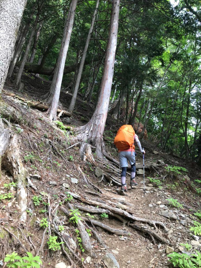 赤石登山口からの急登