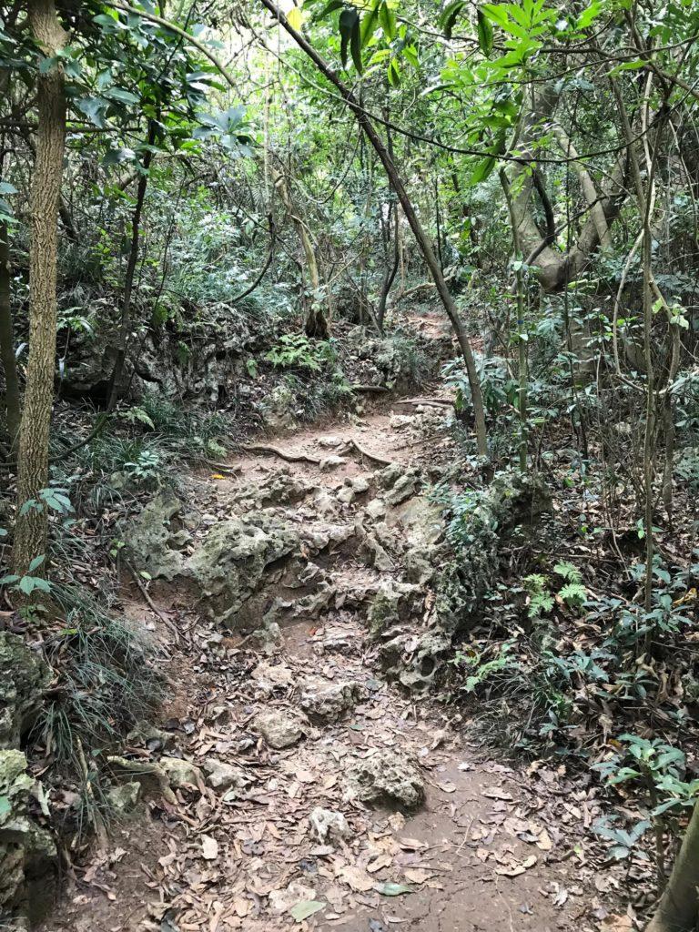 柴山の木道