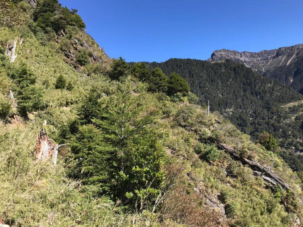 玉山登山道