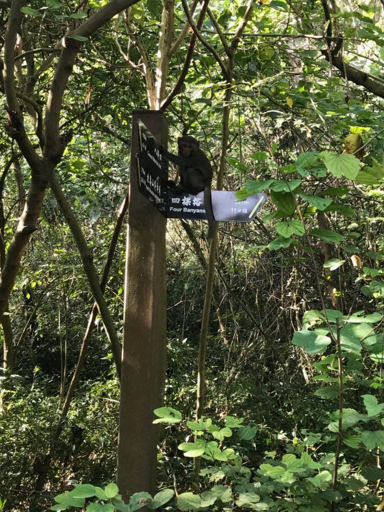 標識のところに子猿