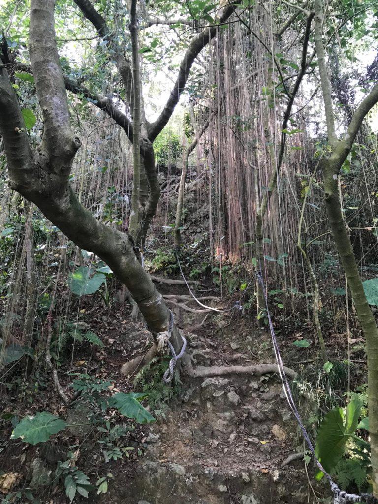 ジャングルみたいな木