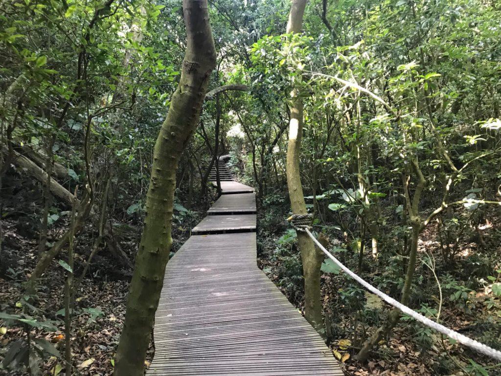 木の間を通る木道