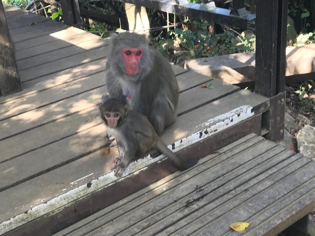 猿の親子が休憩中