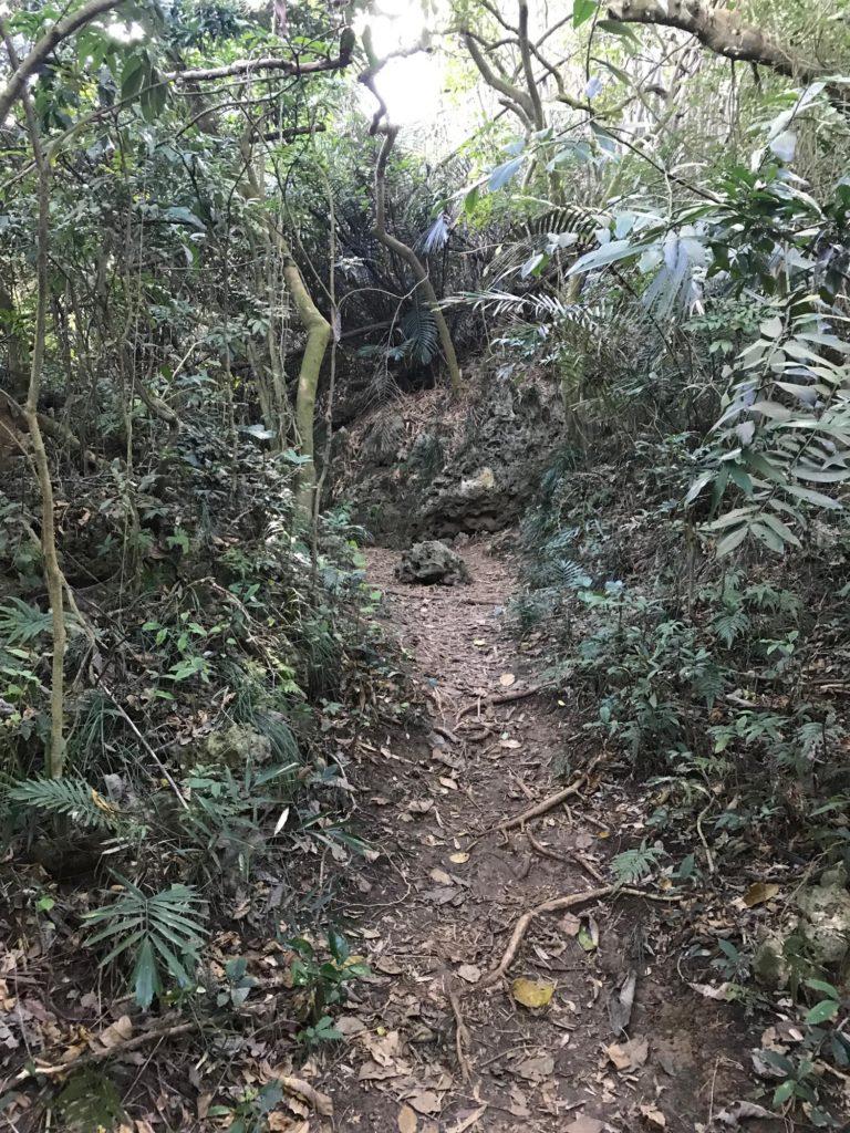 天雨洞への道